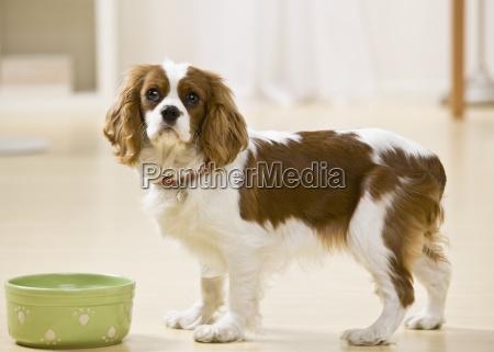 food, aliment, inside, pet, portrait, horizontal - 2834339