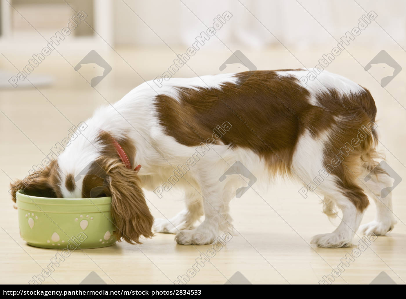 puppy, eating - 2834533