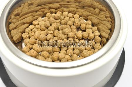 dog, food - 2837325