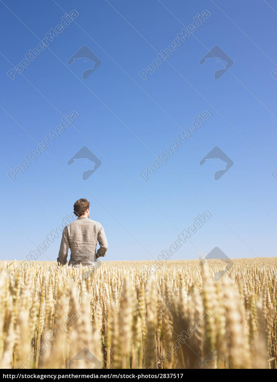 man, in, wheat, field - 2837517