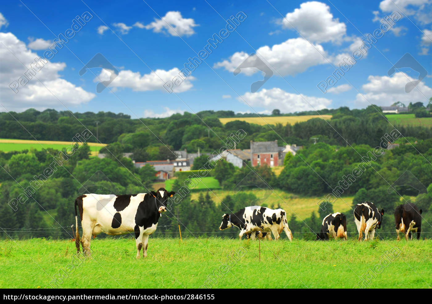 agricultural, city, town, hill, animal, agriculture - 2846155