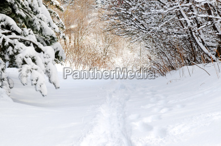 path, in, winter, forest - 2846645