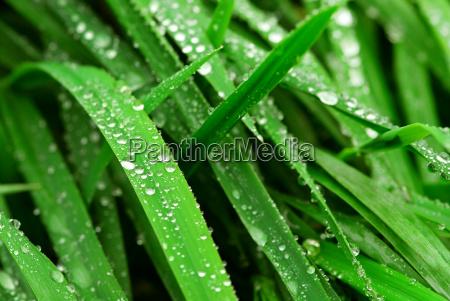 raindrops, on, grass - 2847709