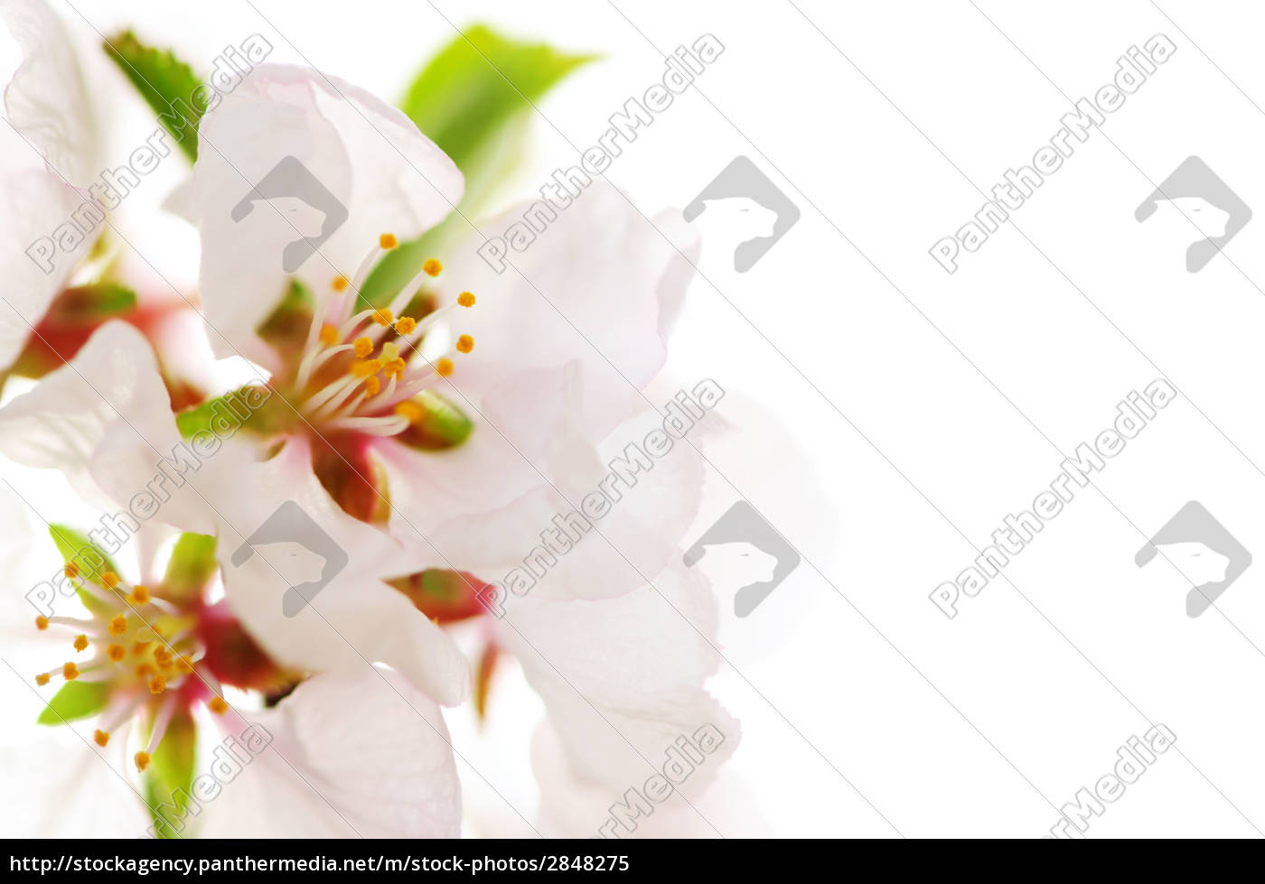 pink, cherry, blossom - 2848275