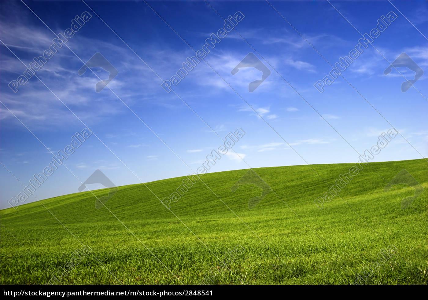 spring, field - 2848541