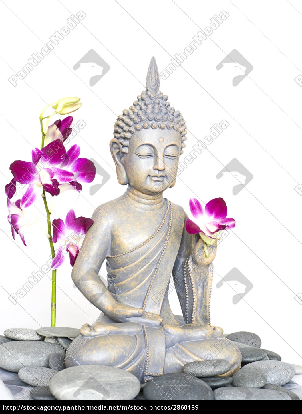 buddha, and, orchid - 2860189