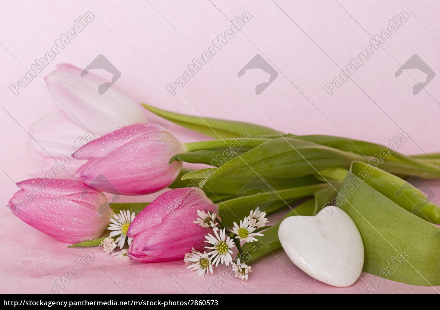pink, tulips - 2860573