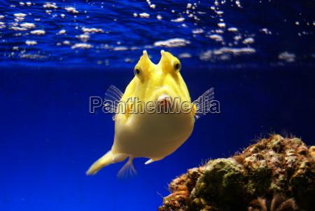 boxfish - 2879571