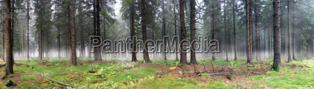 misty, forest - 2897181