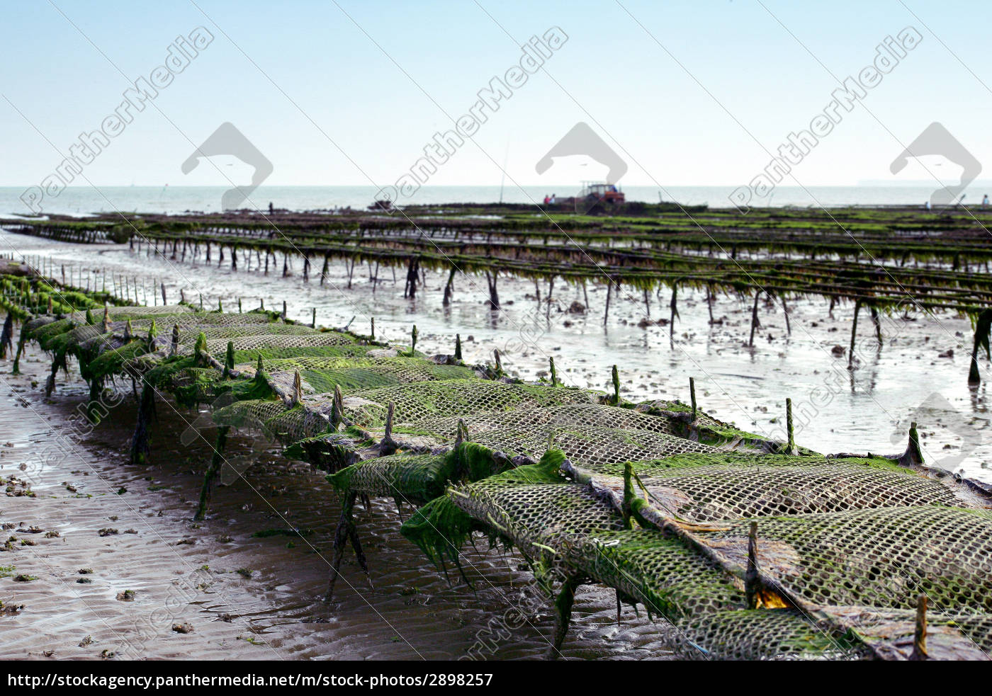 culture, low tide, oyster, pool, oyster pond, oyster farming - 2898257