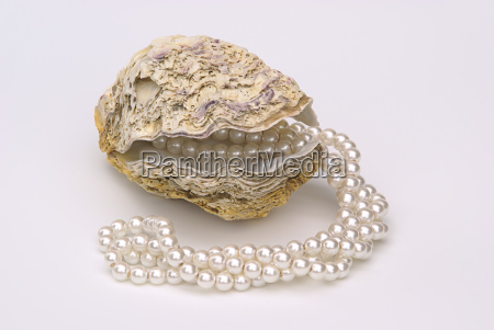 oyster, with, pearl, necklace, -, oyster - 2900343
