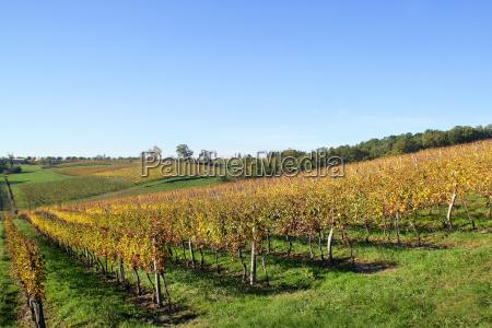 vineyard - 2900657
