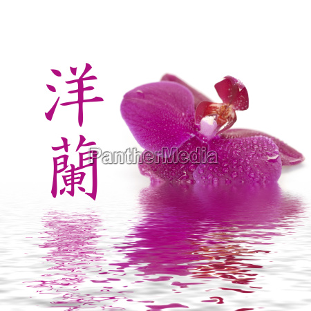 blooming and chinese sign for orchid