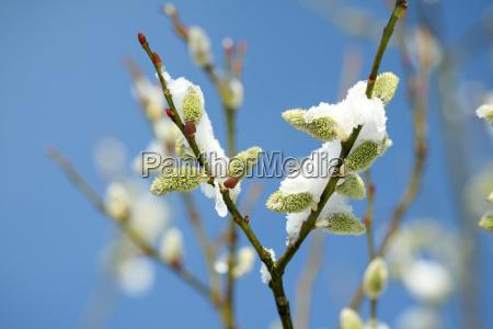 snow, in, spring - 2920331