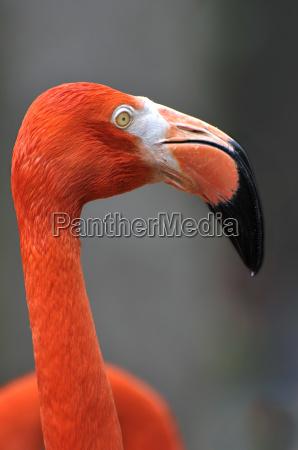 flamingo - 2926163