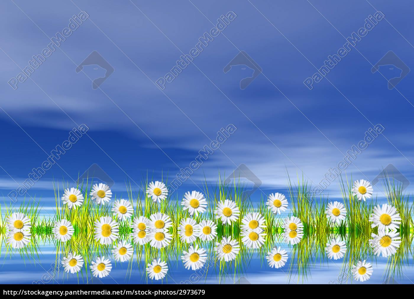 daisy - 2973679