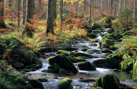 kleine, ohe, bavarian, forest, national, park - 2978835