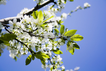 blossoming, flowers - 2981043
