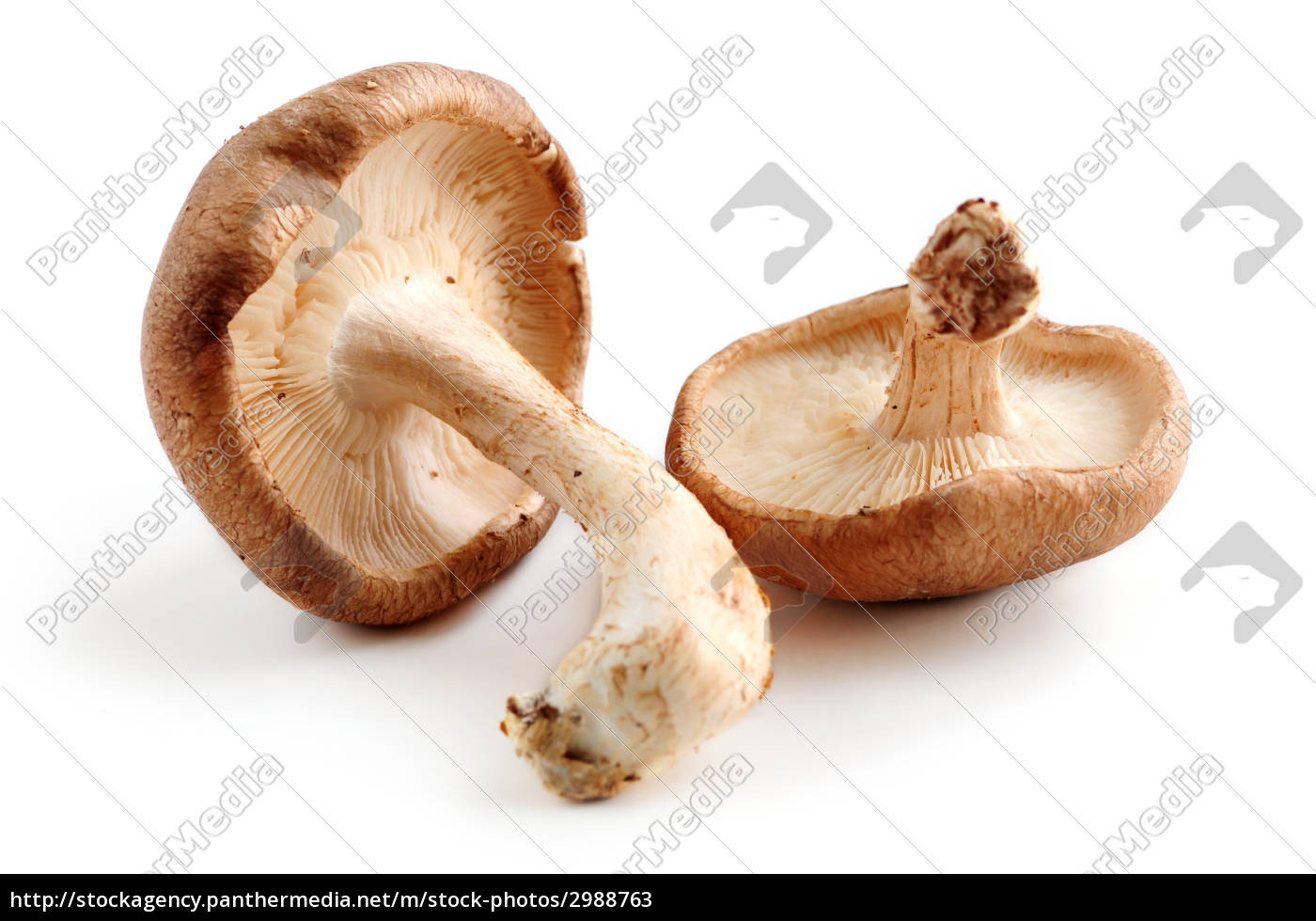 shiitake, mushrooms - 2988763