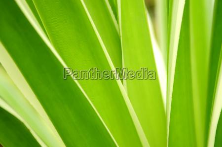 close, leaf, macro, close-up, macro admission, close up view - 2989201