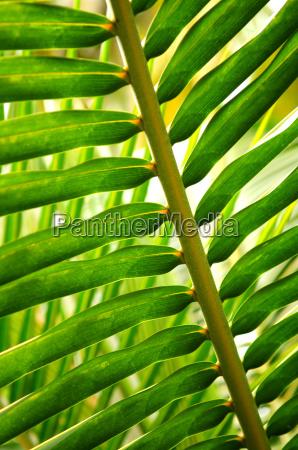 tropical, leaf - 2989197
