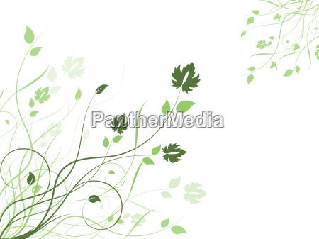 floral, background, - 3002859