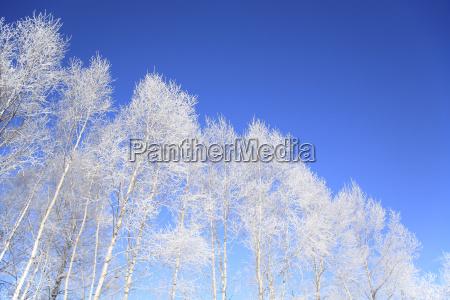 rime on trees