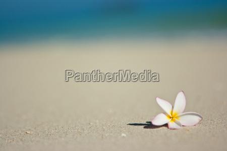 flower, on, beach - 3021726