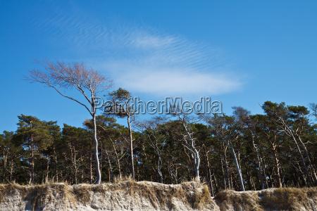 tree group