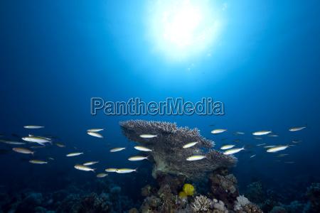 ocean, , fish, and, sun - 3028512