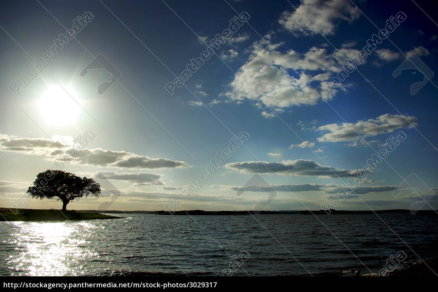 tree, in, alqueva, barrage. - 3029317
