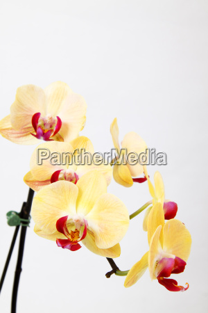 orchid - 3032891