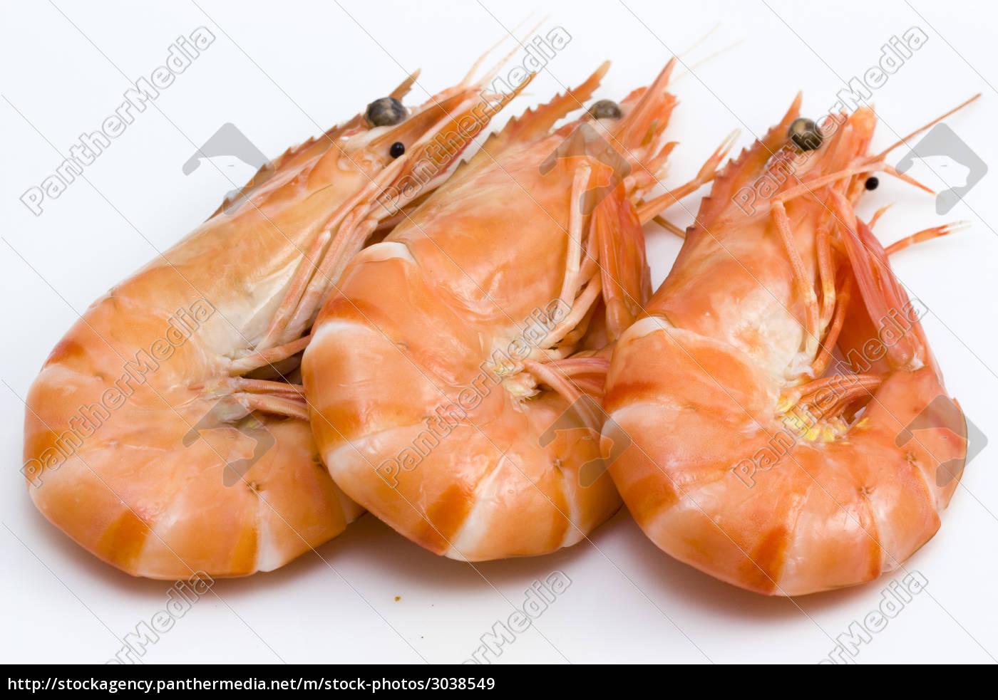 seafood, shrimps, crustacean, lemon, citron - 3038549
