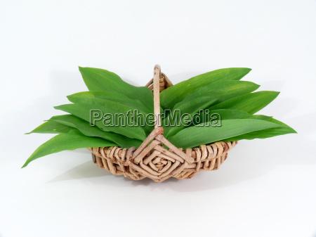 wild garlic in the basket