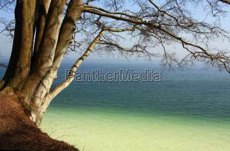tree, on, cliffs, on, rügen - 3055459