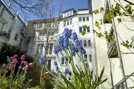 spring flowers in the courtyard staetischen