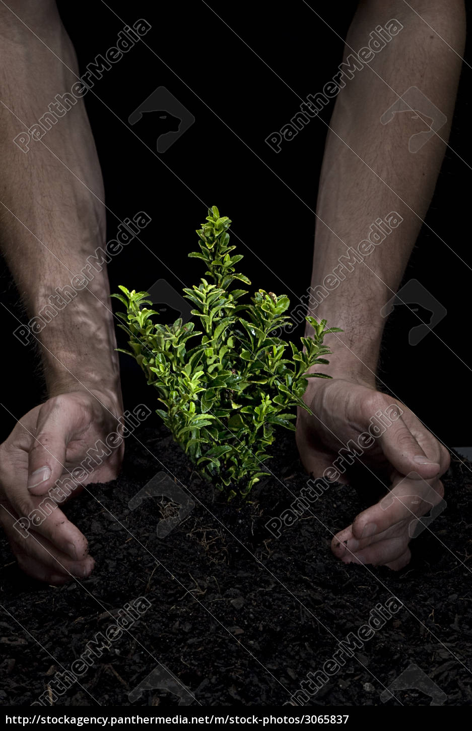 holding, a, tree - 3065837