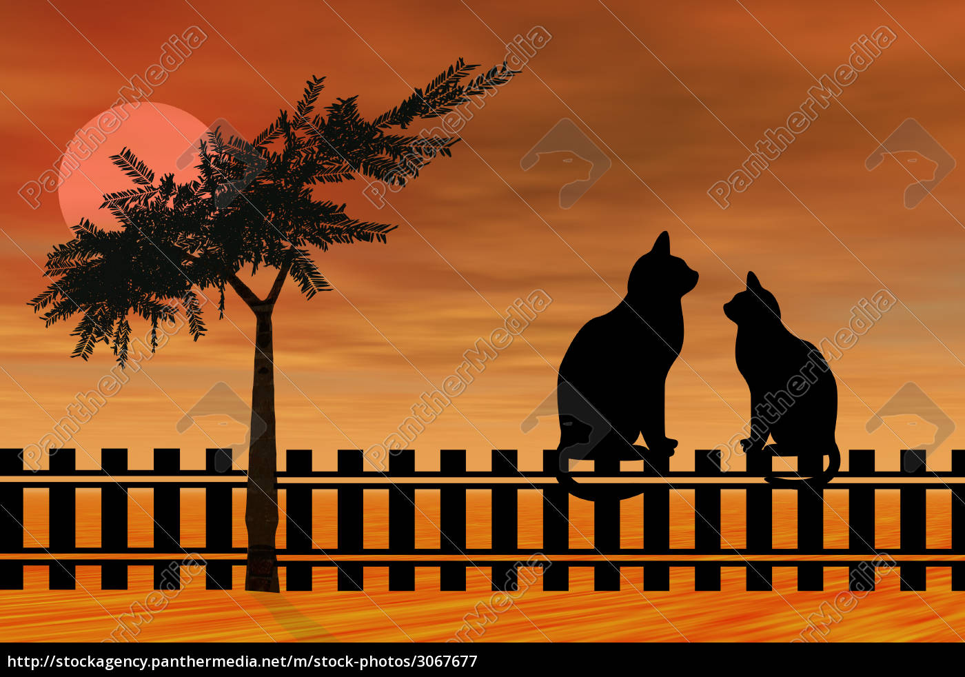 silhouette, cats - 3067677