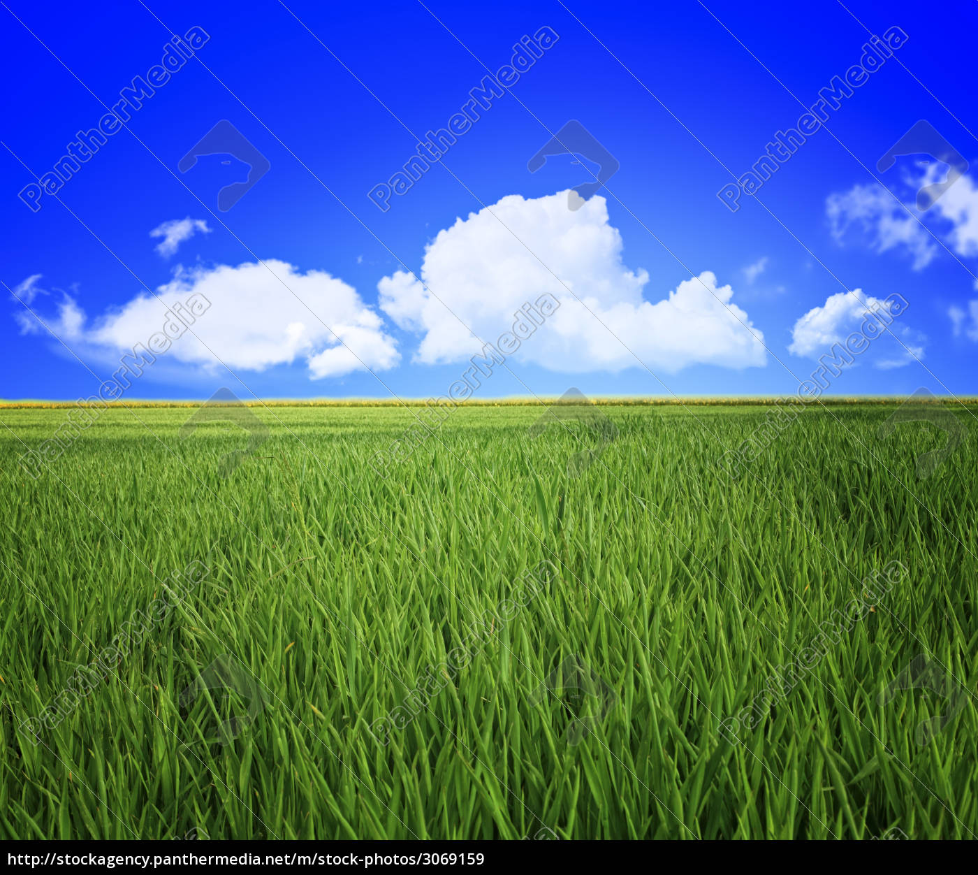grass, field, and, sky - 3069159