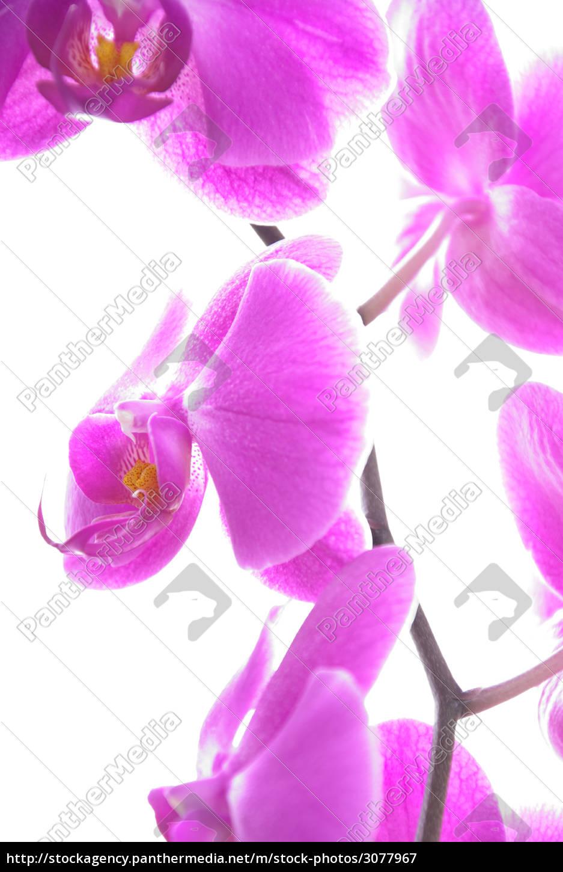 summer, summerly, easter, spring, mother day, flower - 3077967