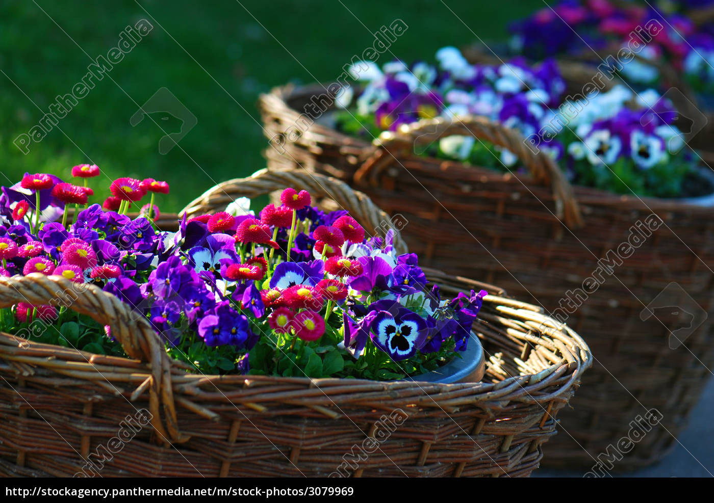 basket, of, spring, flowers - 3079969