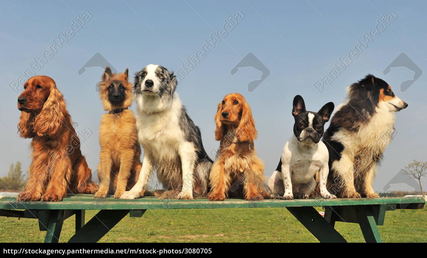 five, little, dogs - 3080705