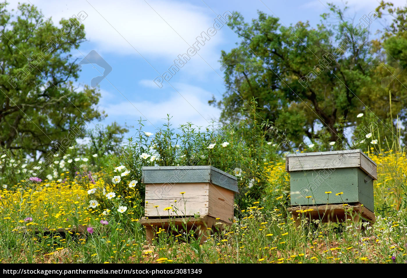 bee, houses, at, portugal. - 3081349