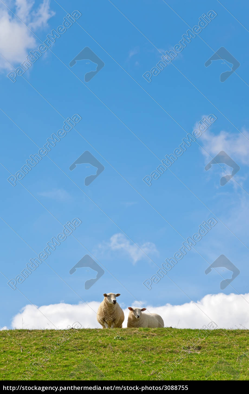 sheep - 3088755