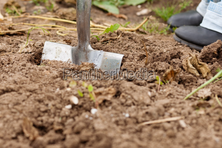 dig the ground in the garden