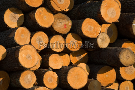 tree, wood, trunk, energy, power, electricity - 3094099