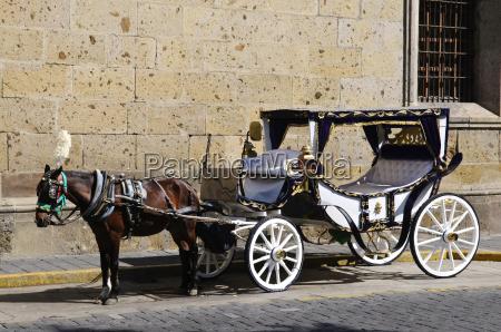 horse drawn carriage in guadalajara jalisco