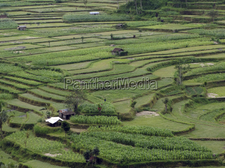 agriculture farming agrarian economy cereal growing