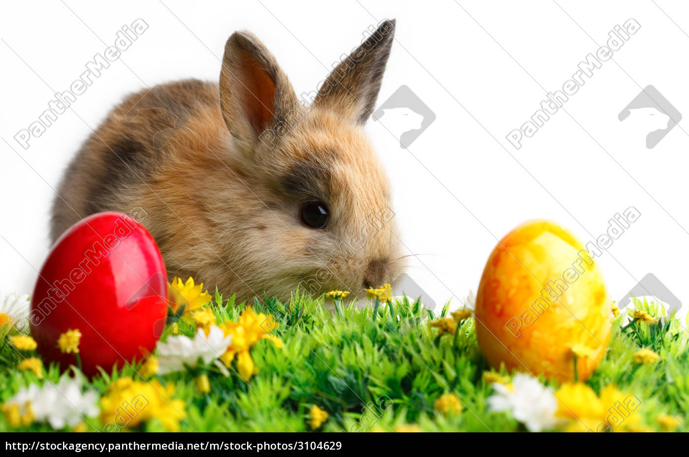 easter, rabbit, bunny, bunnies, egg, holiday - 3104629