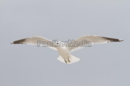 blue motion postponement moving movement bird